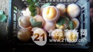 陕西凯特杏最新价格,凯特杏种植
