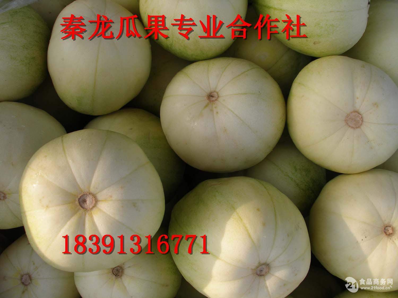 2017陕西大棚优惠甜瓜价格优质甜瓜行情