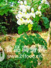 西安昌岳——厂家现货供应辣木籽提取物