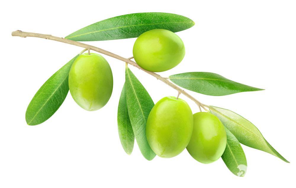 橄榄叶粉 抗病毒,抗菌图片