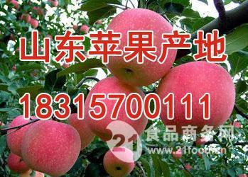 今日山东苹果批发价格苹果批发报道详细