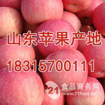 山东红富士苹果价格一斤多少钱?