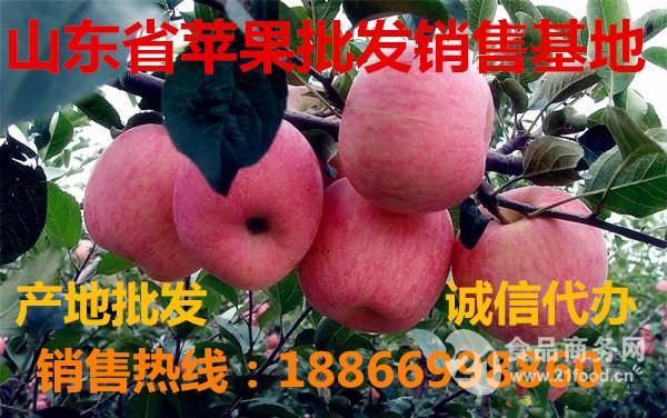 新红星苹果价格 最新红星苹果批发价格