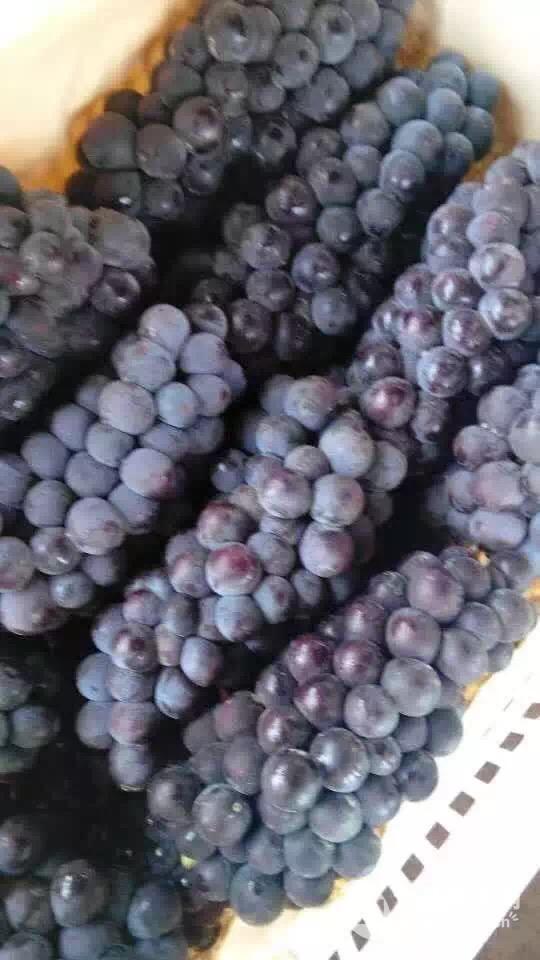2017年夏黑葡萄价格行情走势 夏黑葡萄批发价格