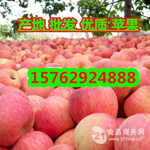 嘎拉苹果价格 山东嘎拉苹果价格低廉