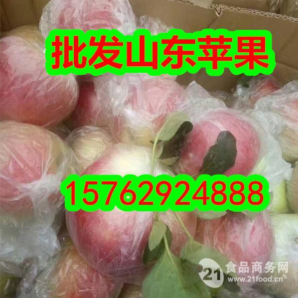山东苹果价格 美八苹果价格