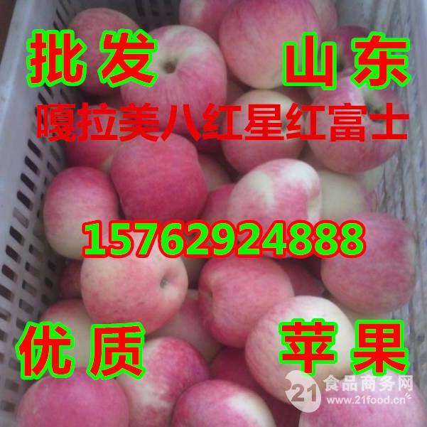 山东苹果供应基地批发美八苹果价格
