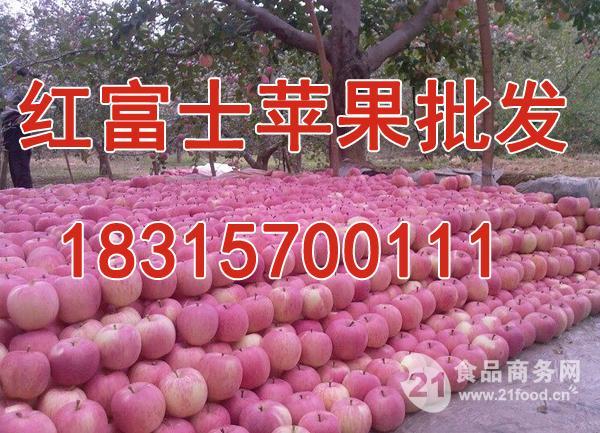 山东苹果价格-红富士苹果产地价格-报道详细