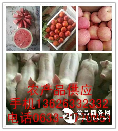 山东仔猪13626332332