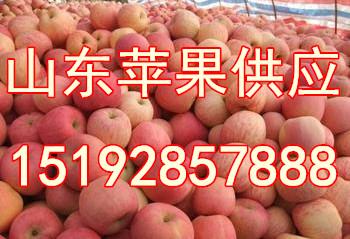 山东省苹果价格