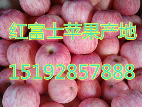 湖南红富士苹果批发价格 今年湖南省苹果批发什么价格