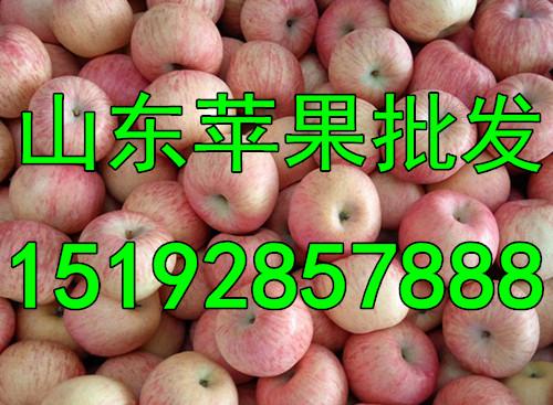 今年烟台红富士苹果收购价格是多少