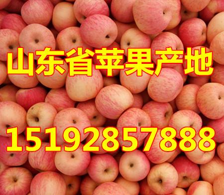 贵州铜仁红富士苹果价格  今日贵州省苹果批发价格