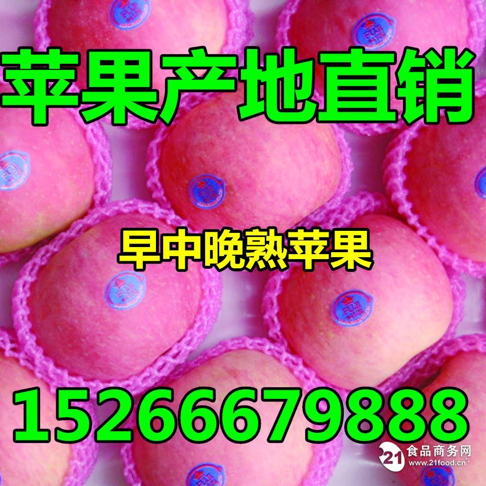 今年红星苹果批发多少钱一斤