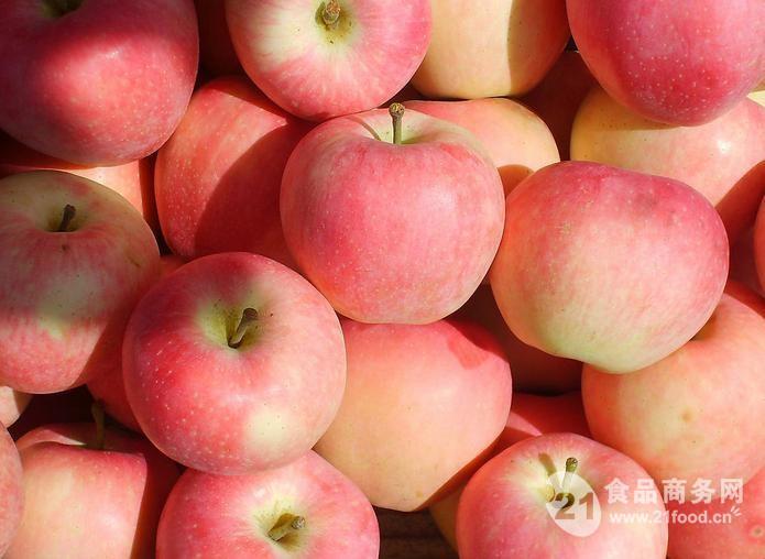 山东万亩苹果供应基地 苹果批发价格