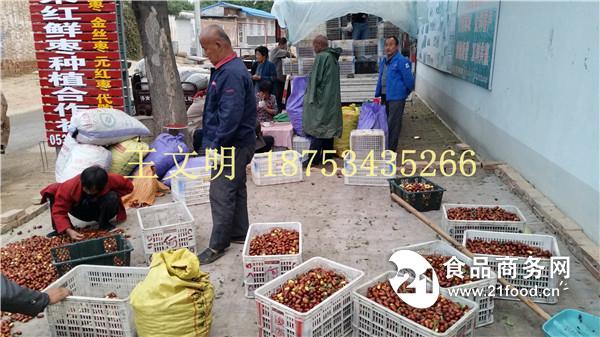 新品山东长红枣收购价格