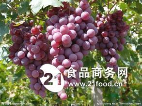 陕西红提葡萄产地价格