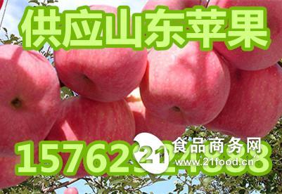 红将军苹果批发价格山东红将军苹果产地价格