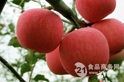 苹果产地在哪 哪里苹果苹果价格便宜