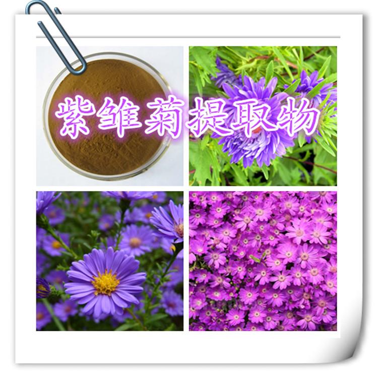紫锥菊提取物  紫雏菊粉