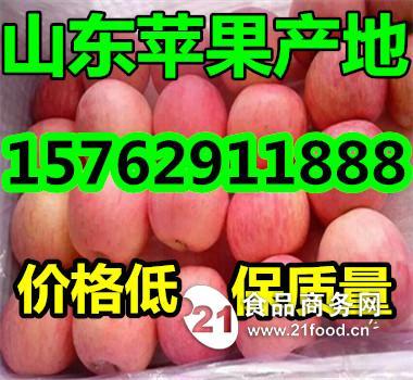 河南洛阳红富士苹果批发多钱一斤
