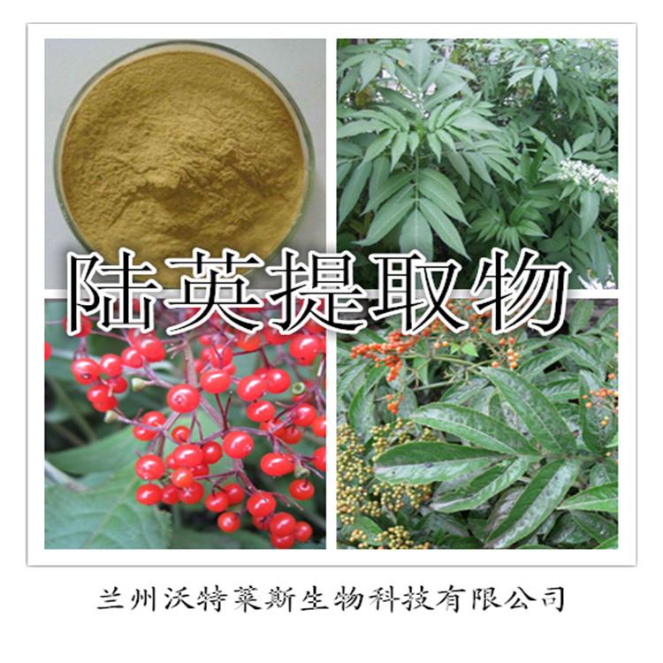 陆英提取物 纯天然 优质 质量保证 厂家 价格