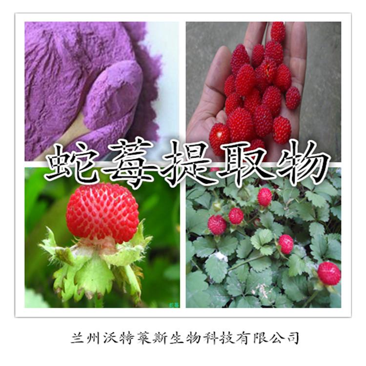 蛇莓提取物 10:1  厂家优质现货兰州沃特莱斯