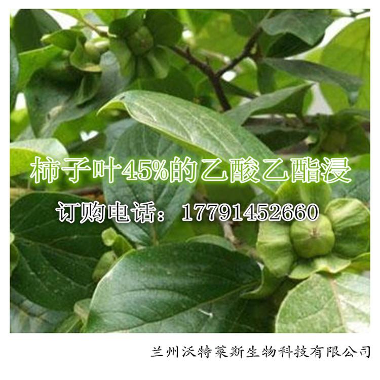 柿子叶提取物 45%的乙酸乙酯浸出物 专业厂家