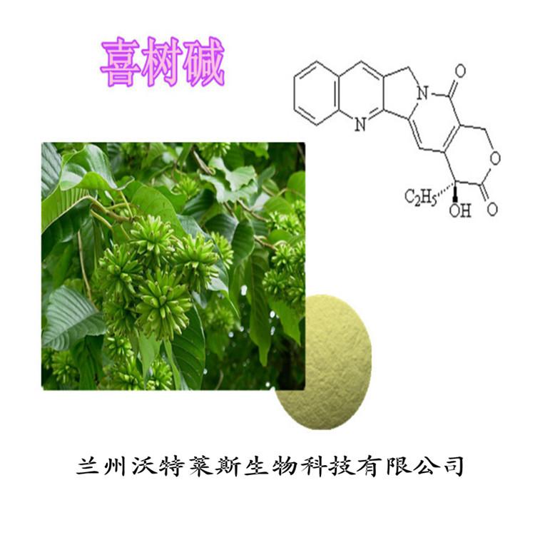 喜树提取物 喜树碱99% 专业植物提取厂家