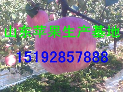 湖南益阳红富士苹果批发价格 *湖南省苹果批发价格