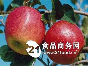 花冠苹果基地
