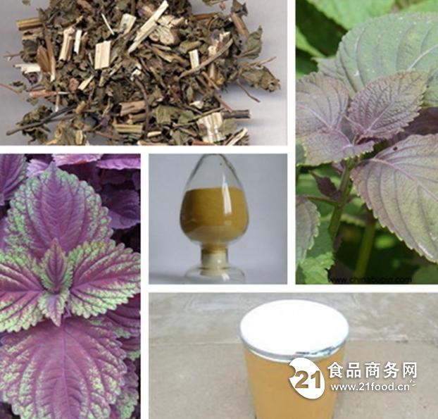 紫苏叶提取物 紫苏粉 厂家直销 品质保证