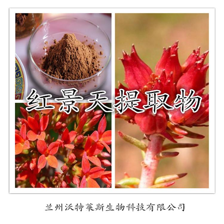 红景天提取物 优质红景天浓缩萃取 美容养颜
