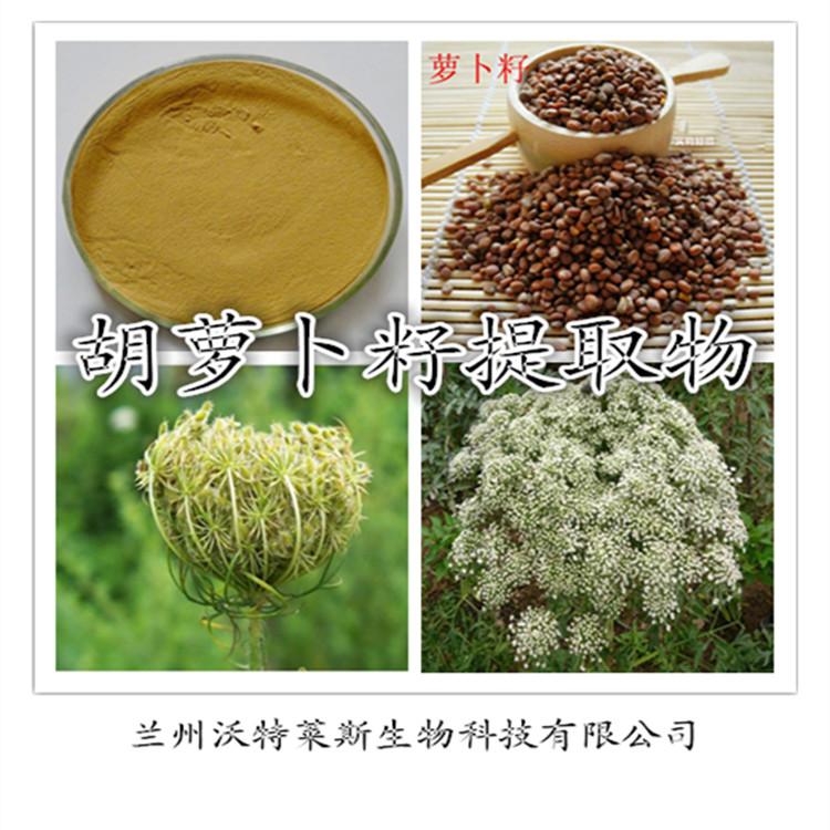 胡萝卜籽提取物 专业植物提取物厂家