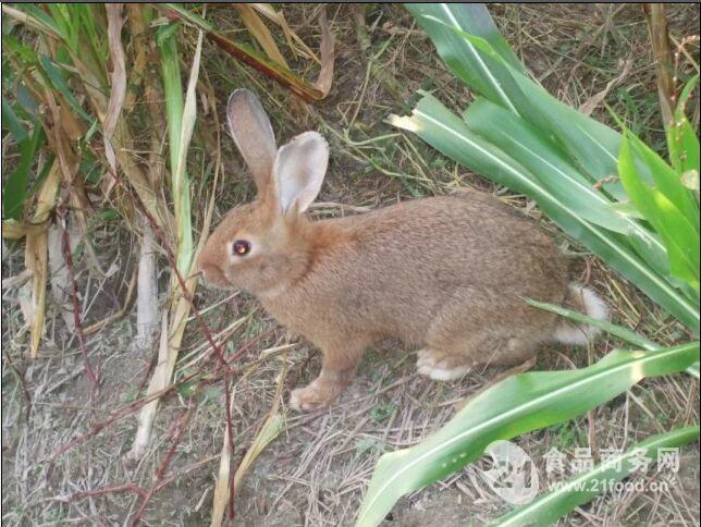野兔是几级保护动物