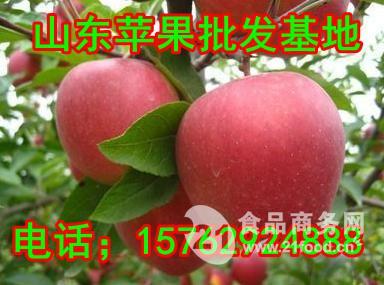 出售苹果价格优惠