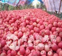苹果产地价格山东红星苹果批发价格多少钱