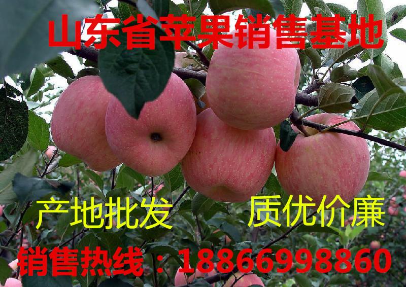 冷库红富士苹果价格