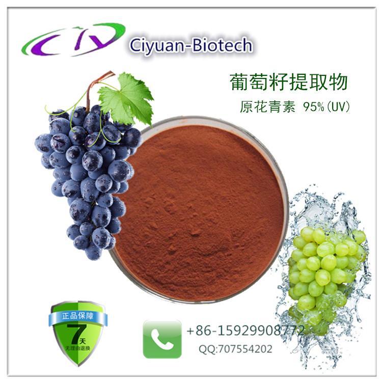 葡萄籽提取物,原花青素95%
