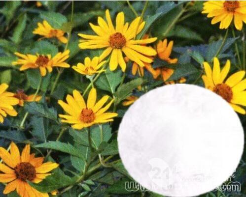 菊粉90% Sun choke tuber P.E.