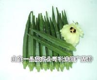 进口黄秋葵种子