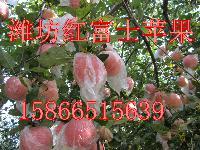 潍坊红富士苹果产地