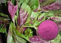 食品级天然苋菜红色素
