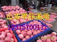 2017年山东冻库苹果价格冻库红富士苹果价格