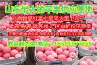 山东苹果产地红富士苹果价格优惠活动开始了
