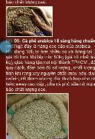 越南咖啡豆