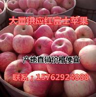 红将军苹果多少钱一斤