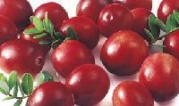 天然蔓越莓香精