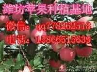 山东红星苹果产地潍坊*苹果交易市场