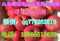 山东潍坊苹果批发红富士苹果产地